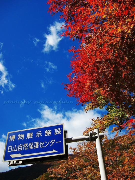 20101104_CHUGU.jpg